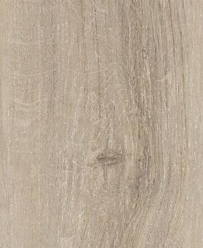 English oak grege