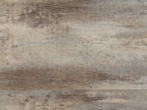 Dub starý šedý