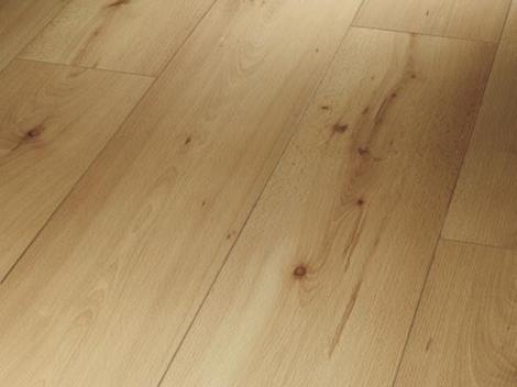 Buk struktura dřeva