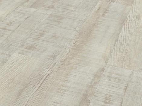 Dub antický bílý struktura uříznutého dřeva