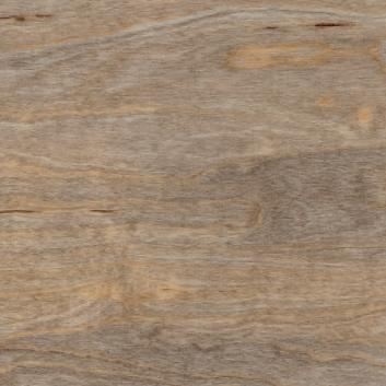Bleached elm SF3W2516