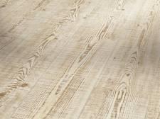 Pinie uříznuté dřevo struktura uříznutého dřeva